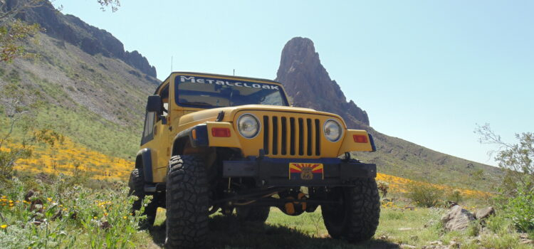 "ModernJeepers Explore a Once in a Lifetime Wildflower ""SuperBloom"""