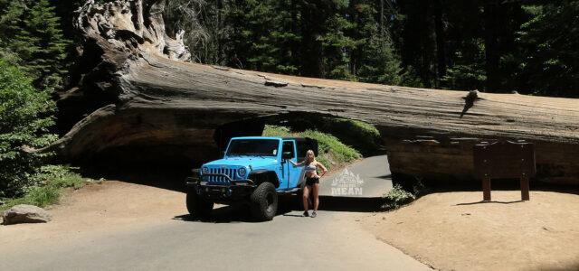 [catie's corner] Jeeping Through The Famous California Sequoias