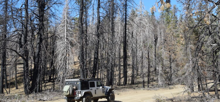 [pics & vid] Restoring Trails After Wildfire; Stonyford OHV