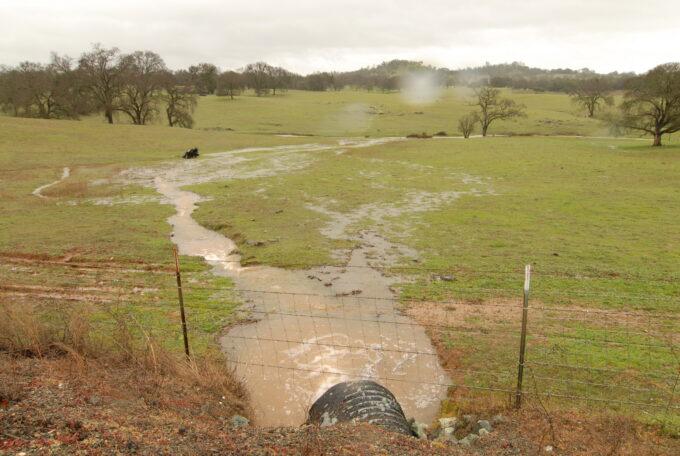 Rain water runoff in pasture, Calaveras County grasslands by Del Albright